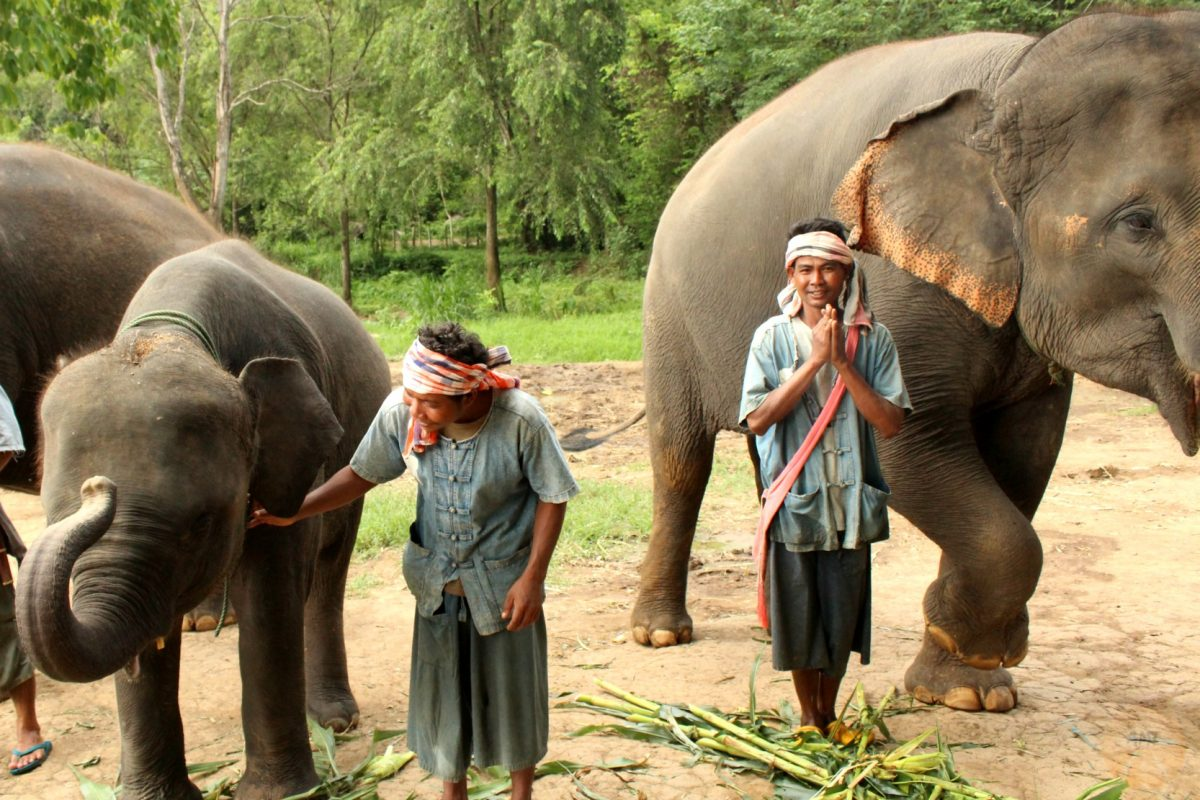 The mahouts and the elephants
