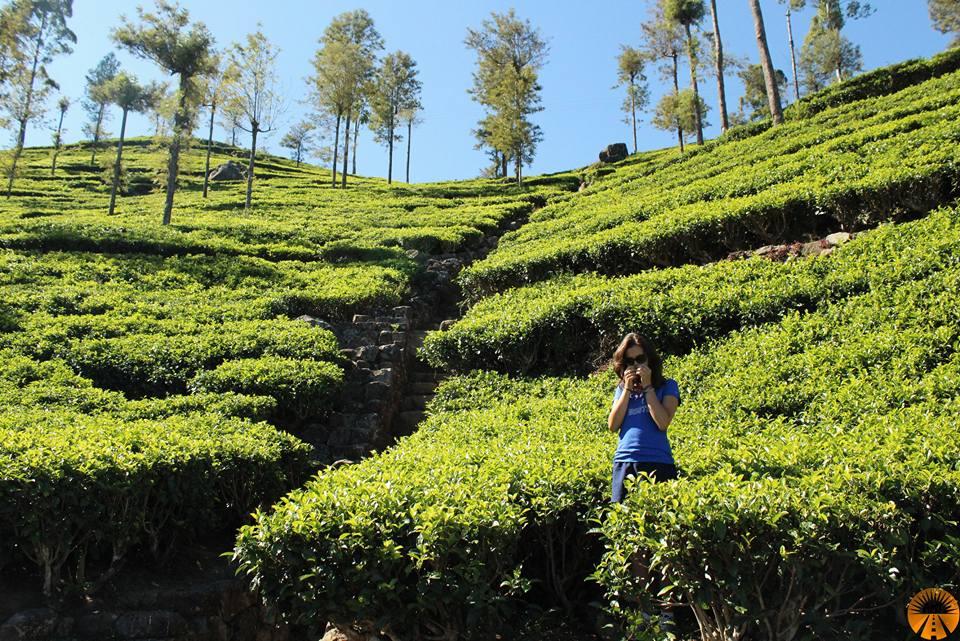 Tea plantations, Lipton's Seat, Sri Lanka