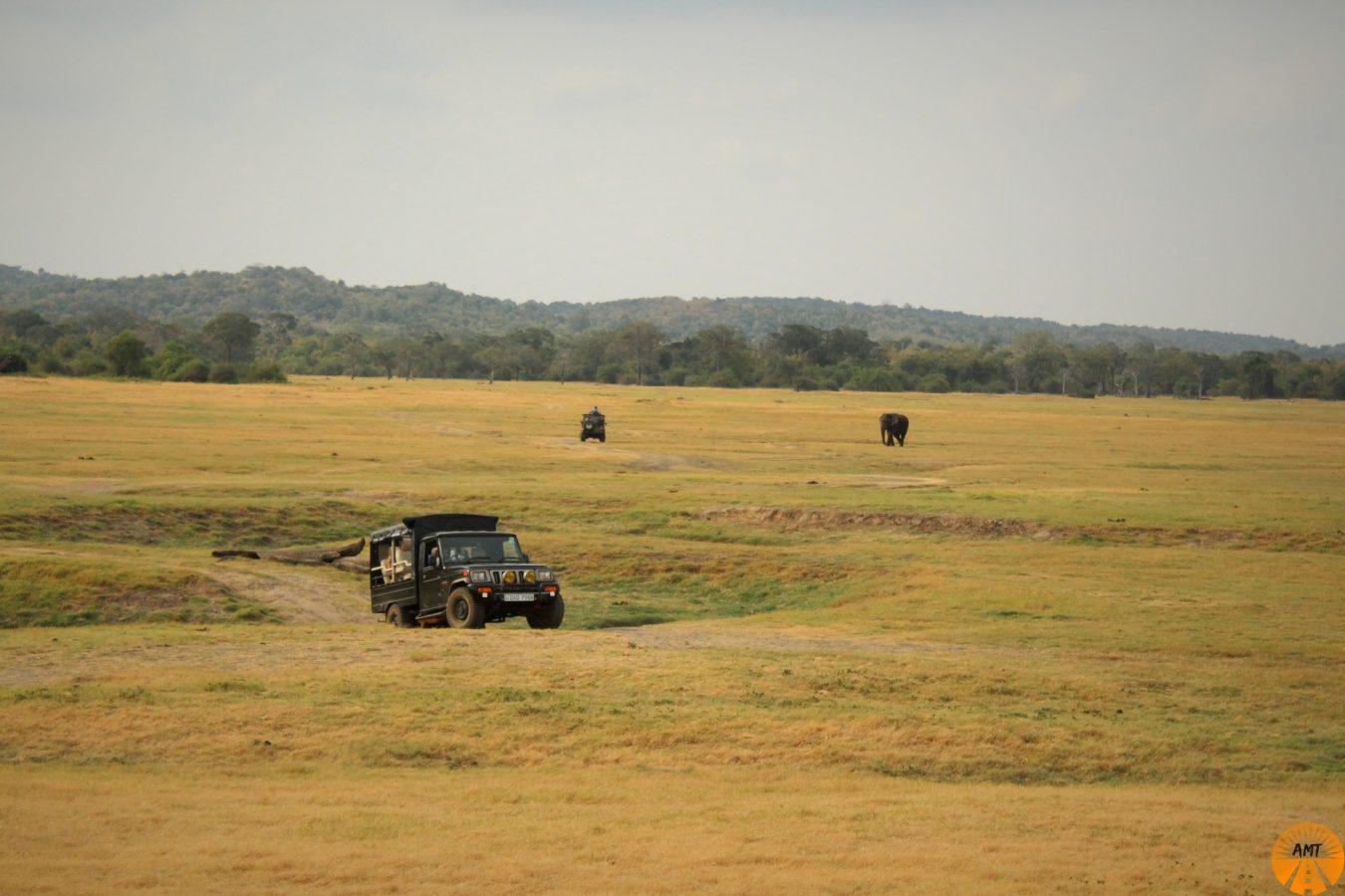 Safari a Kaudulla, Sri Lanka