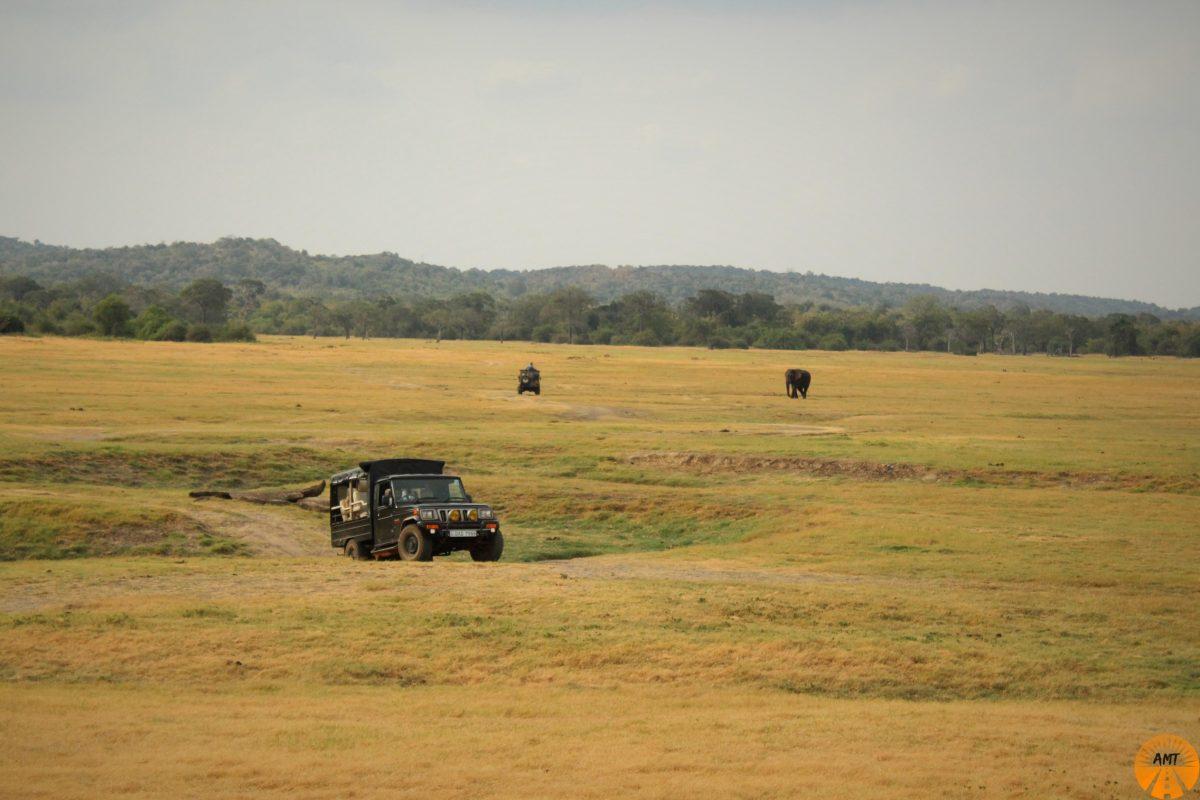 Kaudulla Park Safari, Sri Lanka