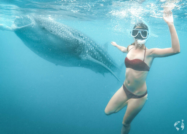 whale sharks cebu philippines