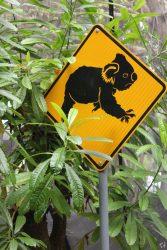 koala sign australia
