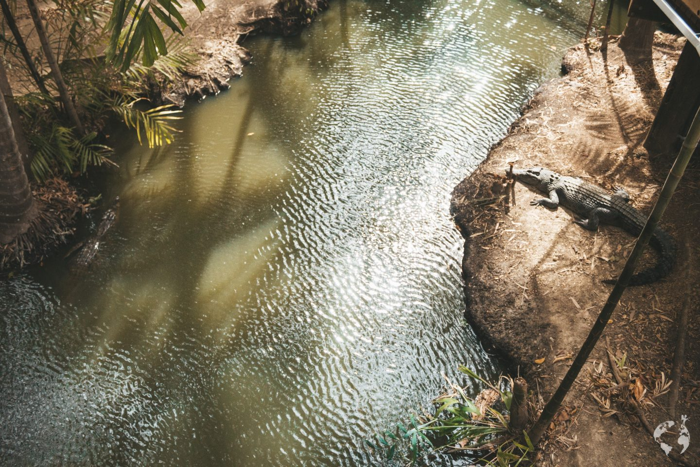 where to see crocodiles cairns port douglas