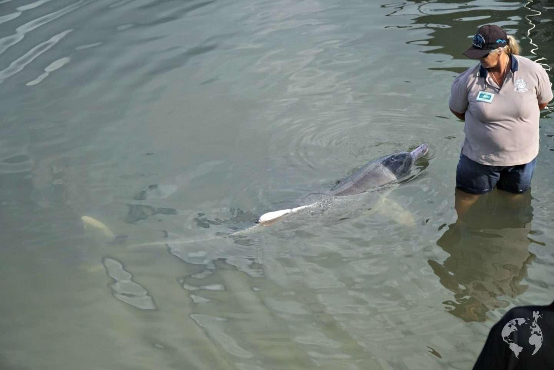 Dolphins Tin Cay Bay