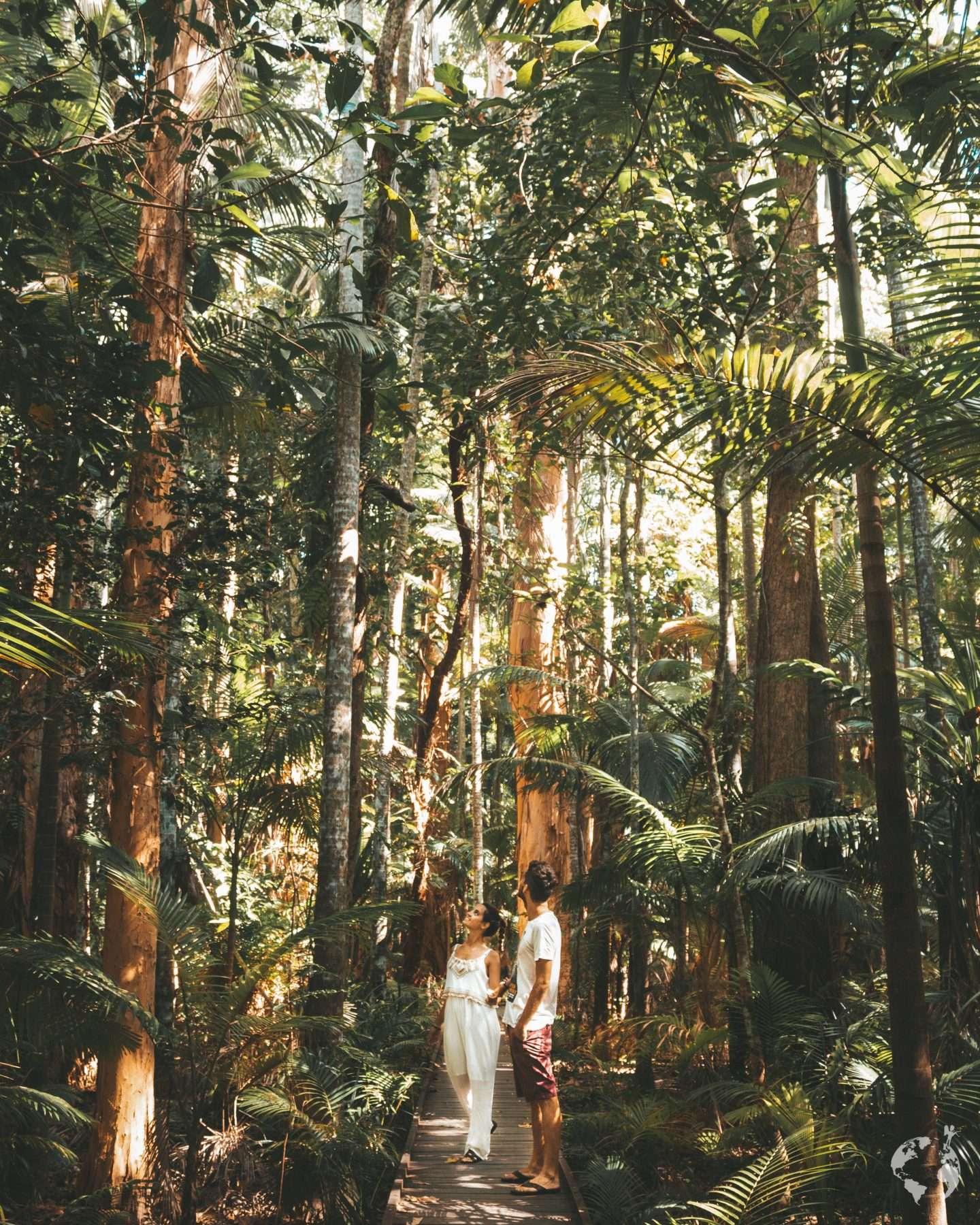 Cairns Tropical Queensland