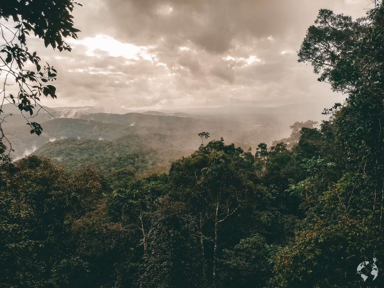 Kuranda rainforest cairns australia
