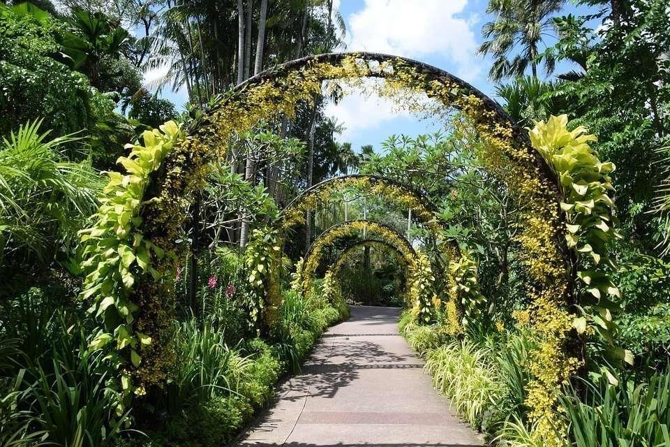 botanic gardens singapore how to go